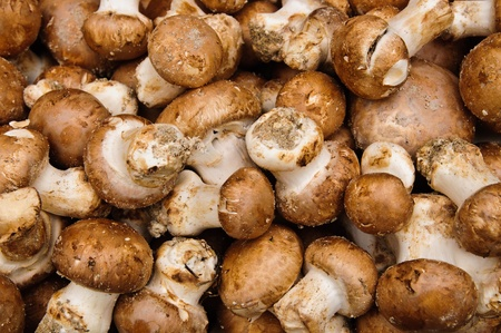 Pile of fresh wild mushrooms in a market stand