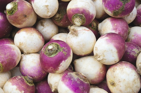 Fresh pink and white turnips in a market