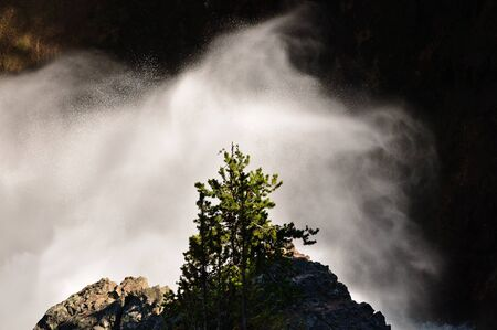 Waterfall and Tree, yellowstone National Park, wyoming
