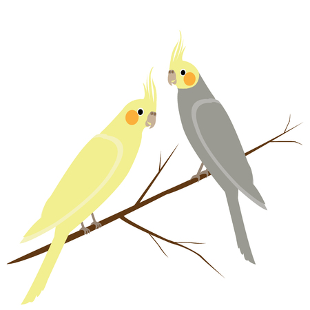 Gray and yellow parrots on a branch