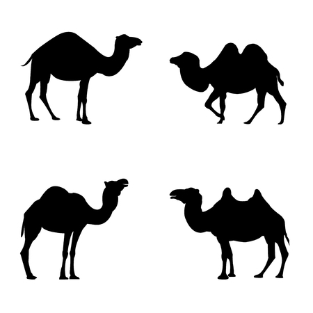Vector set of four silhouetted camels on white background Ilustrace