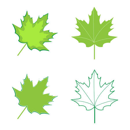 Realistic green maple leaves on white background