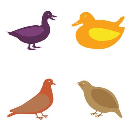 Vector set of birds including a ducks and pigeons Stock Illustratie