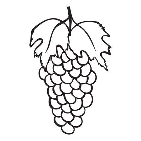 Black and white grape with leaf vector icon