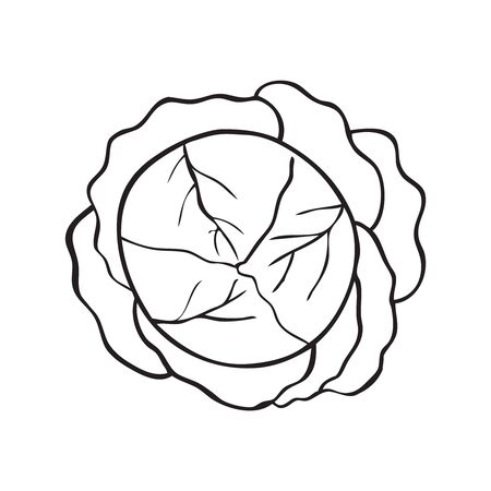 Black and white vector illustration of cabbage