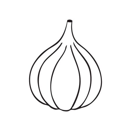 Black and white black and white vector of an onion