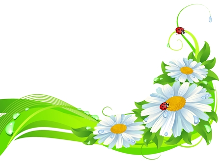 Decoration with daisy, ladybugs, and water drops Stock Vector - 2370830