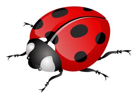 ladybug Stock Photo - 2614536