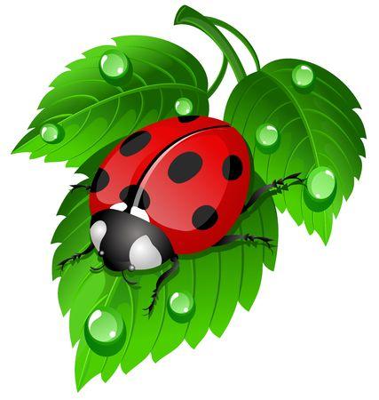 잎에 무당 벌레 스톡 콘텐츠