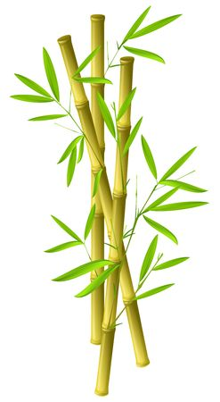 Illustration of bamboo branches isolated on white