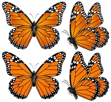 butterfly flying: Orange butterfly