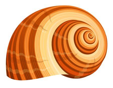 Seashell Stock Photo - 3194347