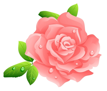 Pink rose Stock Vector - 3216747