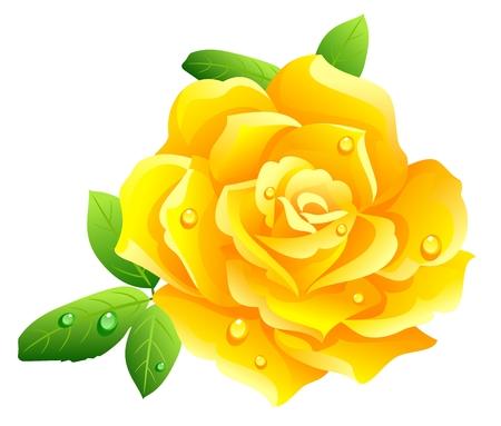 rosas amarillas: Rosa amarilla