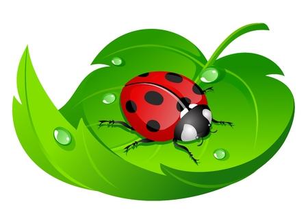 water drops on leaf: ladybug on leaf