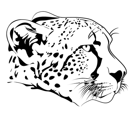 the fastest: Cheetah head