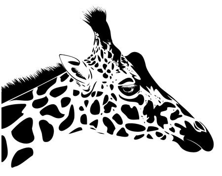 Jirafa cabeza Ilustración de vector