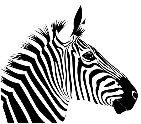 zebra skin: Zebra head