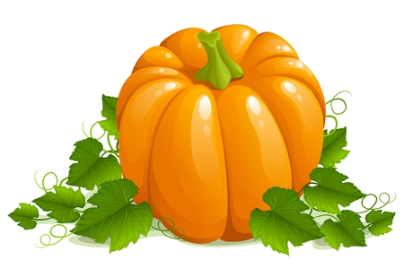 Pumpkin isolated on white Stock Vector - 3632001