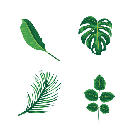 Green leaves tropical palm, plants and trees isolated on white background. Green foliage of exotic monstera tree, coconut palm and rainforest plants. Houseplant and summer garden