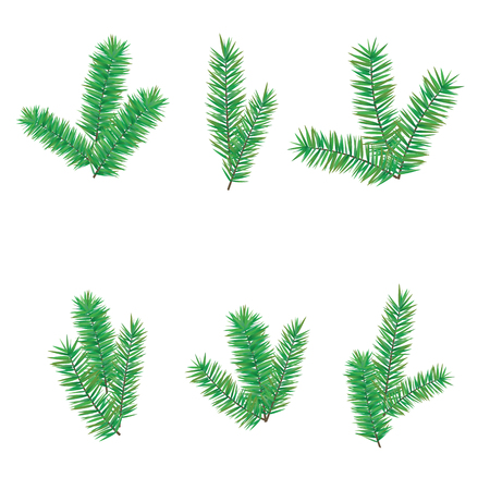 Green branches fir tree for Merry Christmas or Happy New Year decoration. Branches evergreen conifer trees of different shapes isolated on white background