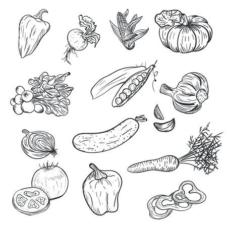 Dibujo a mano verduras en estilo doodle aislado sobre fondo blanco. Doodle dibujo vegetal. Cosecha de otoño madura y cosecha agrícola. Tomate, pimiento, ajo, zanahoria, calabaza y otros Ilustración de vector