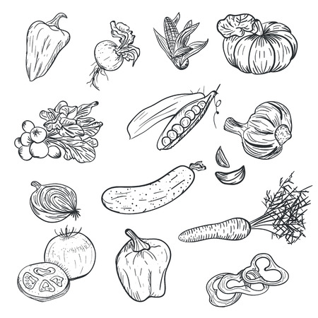 Warzywa rysunek ręka w stylu Bazgroły na białym tle. Doodle rysunek warzyw. Dojrzałe jesienne zbiory i uprawa zbiorów. Pomidor, papryka, czosnek, marchew, dynia i inne Ilustracje wektorowe