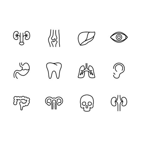 Human body internal organs icon simple symbols set. Contains icon kidneys, joints, liver, eyes, stomach, tooth, lungs, respiration, ear, intestines, uterus, ovaries, skull. Medicine and anatomy.