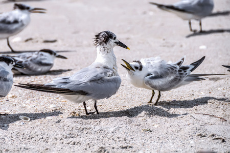nagging: Birds that look like a family having some conflict and arguing at the beach