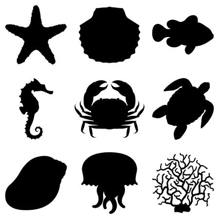starfish beach: Sea animals. Illustration