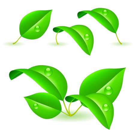 Green leaves. Illustration