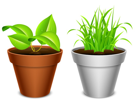 terracotta: Two plants in brown and white pots
