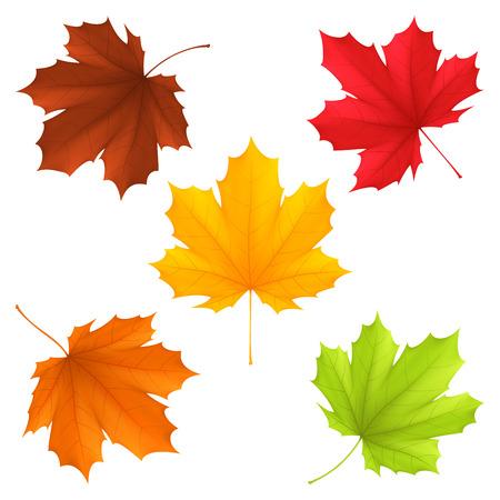 Colección de hojas de otoño de color