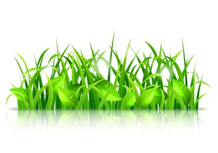 reflection of life: Fresh green grass and leaves on white background