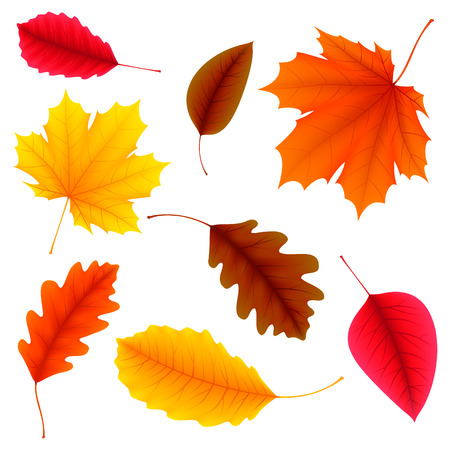 illustration of color autumn leaves on white background Çizim