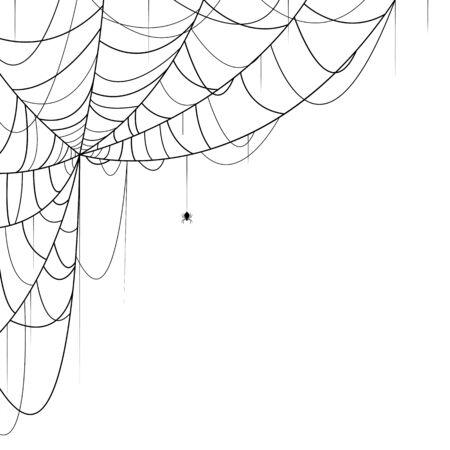 arachnid: Vector illustration of spider and web on white background Illustration