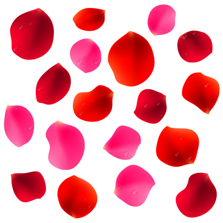 pink rose petals: Red and pink rose petals covered by waterdrops and isolated on white background Illustration