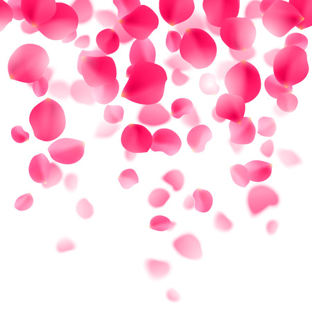 Red rose petals falling down on white background