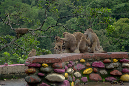family of monkeys are sitting near the road in gloomy weather Stock Photo