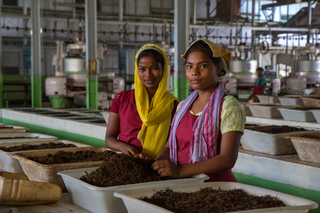 2013 06, India, Assam: yuong girls sorting tea in tea factory