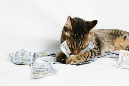 Beautiful cat holding dollars on white background Banco de Imagens