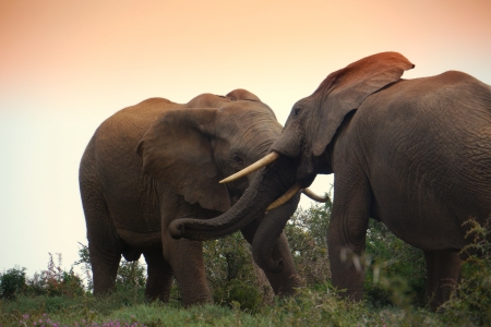kruger national park: battling elephants