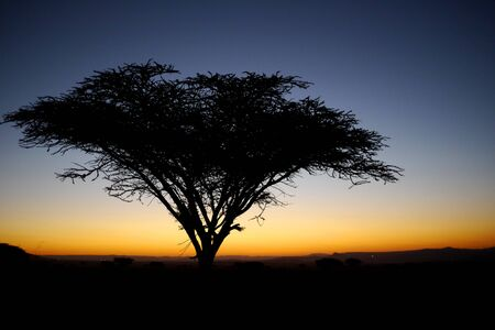 thorn tree on the african savannah at sunset Stock Photo