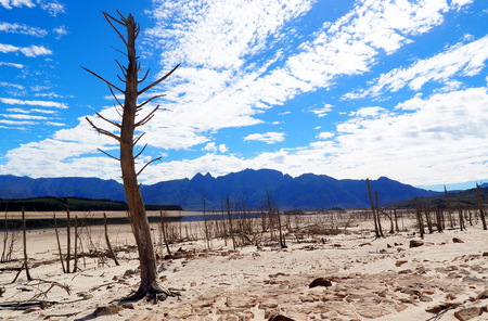 old trees in dry drought stricken landscape
