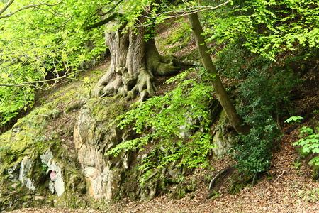 breen: Molto Green Tree