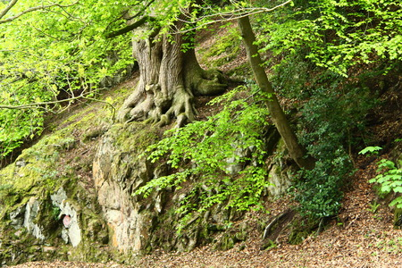 breen: Very Green Tree