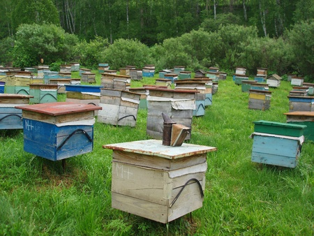apiary: Apiary in the meadow