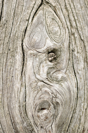 curlicue: Wood texture with curlicue as a human face