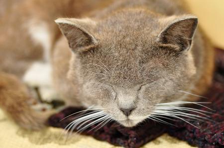 gray cat: Gray cat.