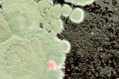 mold Foto de archivo